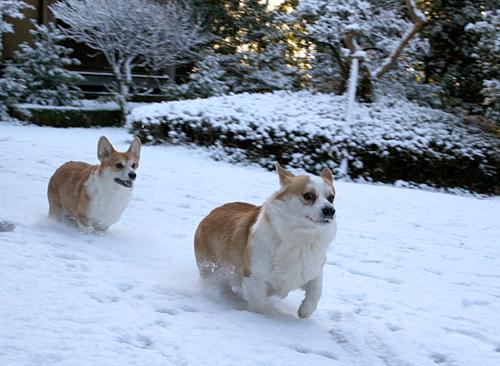 2010-1231積雪2