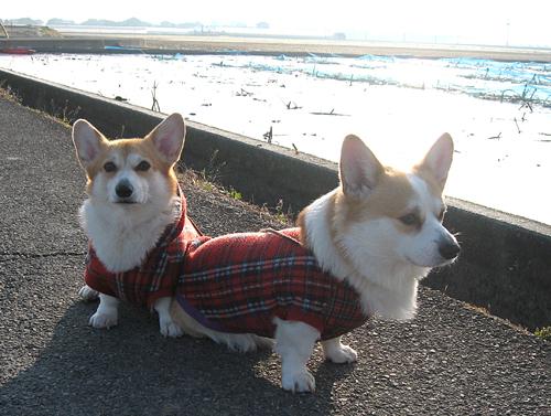 2011寒かった散歩