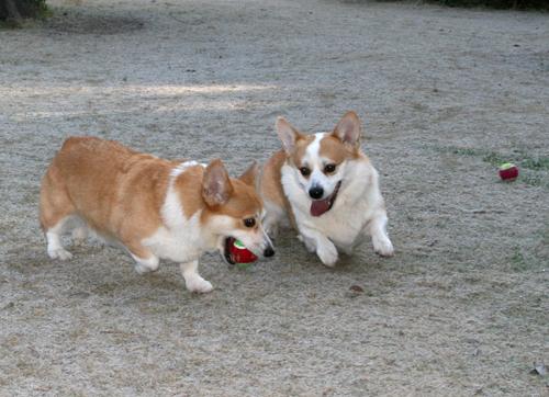 ハニーのボールをねらうリッチ