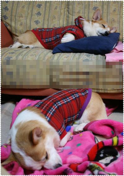2011ハニーとリッチの寝顔5