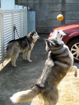 ボール遊びトリュフ