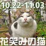 花笑みの猫