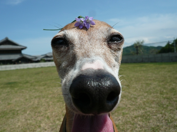花を乗せようが、目の前にカメラを持ってこよーが、微動だにせず!笑