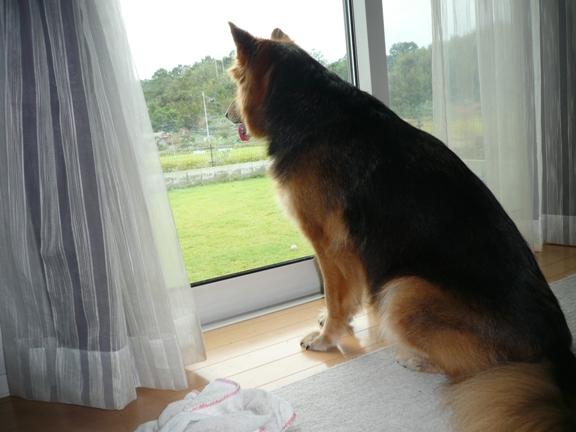 おとーさん、早く帰ってこないかなー。。