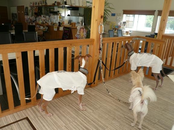 ドッグカフェへ来るといつも、厨房に釘付けなTDC
