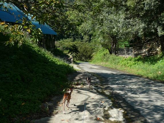 この道路の感じも乗馬クラブに似てます♪