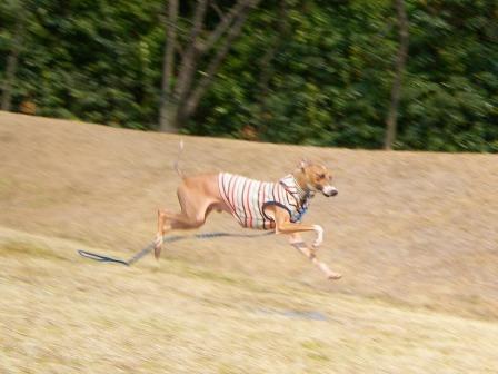 飛行犬 発見っ!