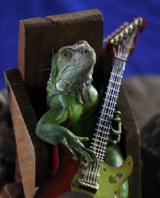 タイで「ギター弾く」イグアナが登場。写真はいすに座りながら前足でギターを持つイグアナ