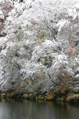 新潟県湯沢町では、今年初めての本格的な降雪があり、紅葉が雪化粧に染まった