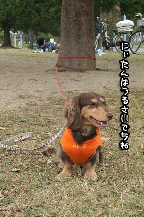 2009 10 25 鶴見緑地l公園 blog04のコピー
