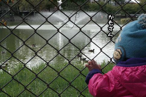 2009 11 03 大泉緑地公園 blog03のコピー