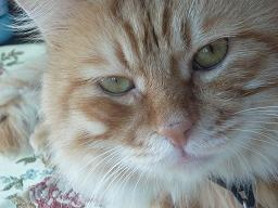 headcat.jpg