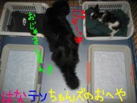 2007_1007画像0055