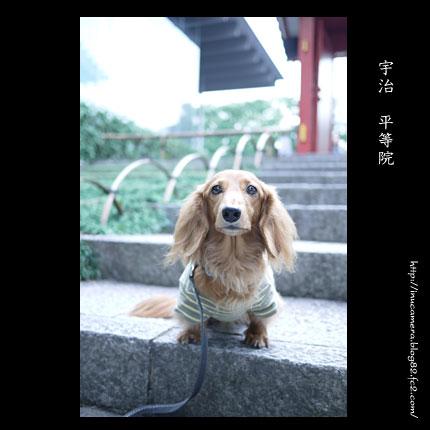 walks_51_07.jpg