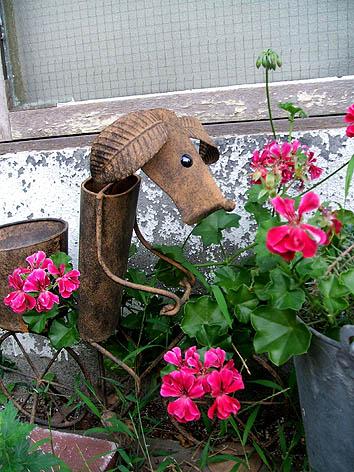 20110807犬錆び花DSCF6953