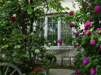 2007年春のバラ-4