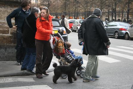 ヴァンヴの帰り道犬