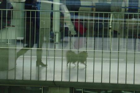 CDG空港で散歩のベル2