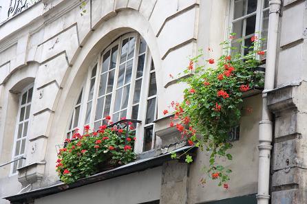 パリの花9