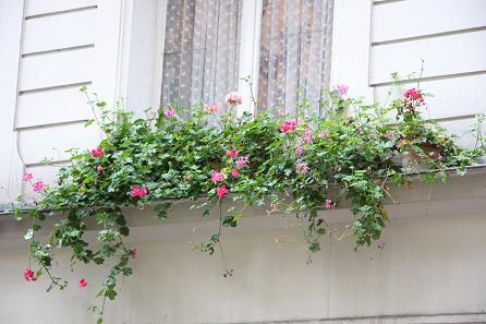 パリの花16