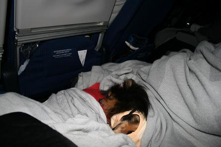 機内で眠るベル