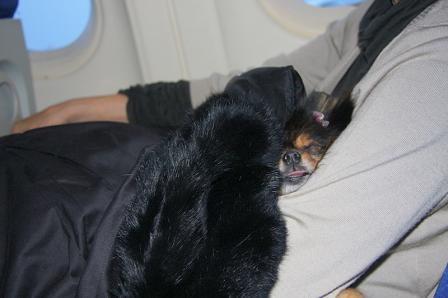 CDGからミラノへの機内のベル