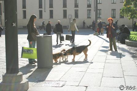 ドゥオーモ大聖堂と犬たち