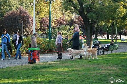 ティチネーゼ通りの公園と犬2