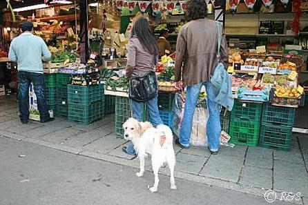 ナヴォリオ運河と犬2