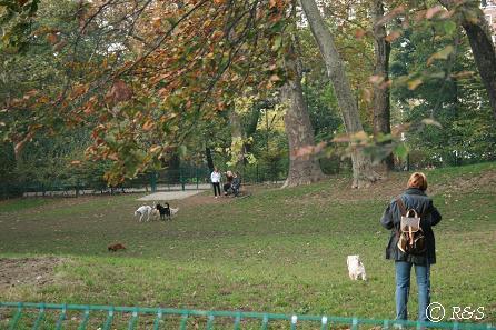 プッブリチ公園の犬たち