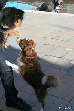 ブラーノ島のベルと犬1