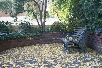 成城の庭のベンチ2