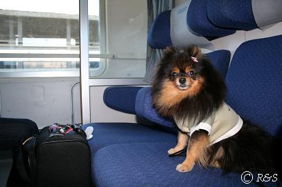 ヴェローナ行きの列車のベル1