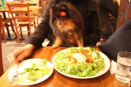 原宿犬OKレストラン3IMG_3880