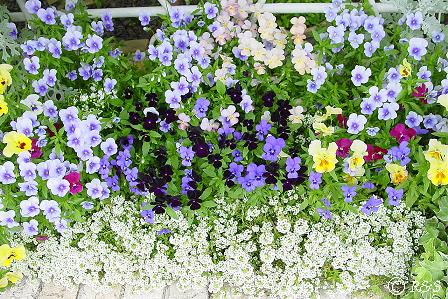 去年の花壇1DSC02075