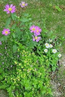 去年の花2小DSC02421
