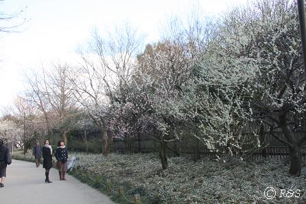 新宿御苑-梅12IMG_9645
