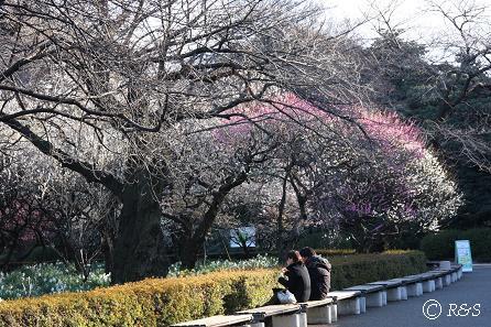新宿御苑-梅6IMG_9724