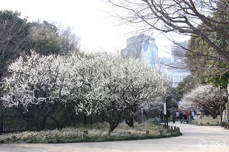 新宿御苑-梅11IMG_9638