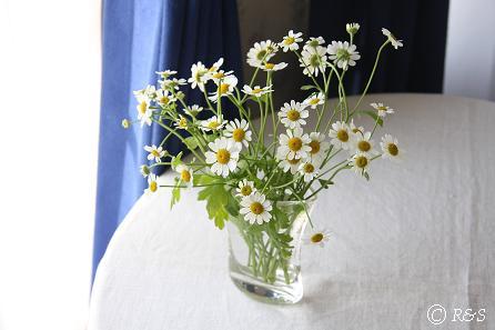 花瓶32IMG_9900