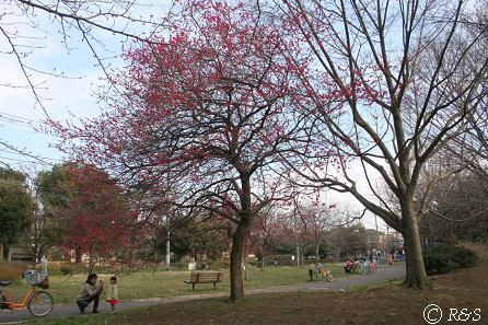 公園2IMG_8160