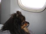 パリ旅行機内のベル-1