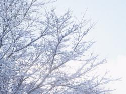 雪景色5_convert_20110212201655