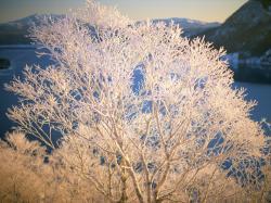 雪景色_convert_20110212202043