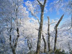 雪景色2_convert_20110212202130