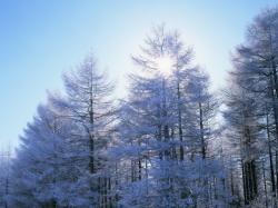 雪景色3_convert_20110212202202