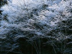 景色_convert_20110318223244