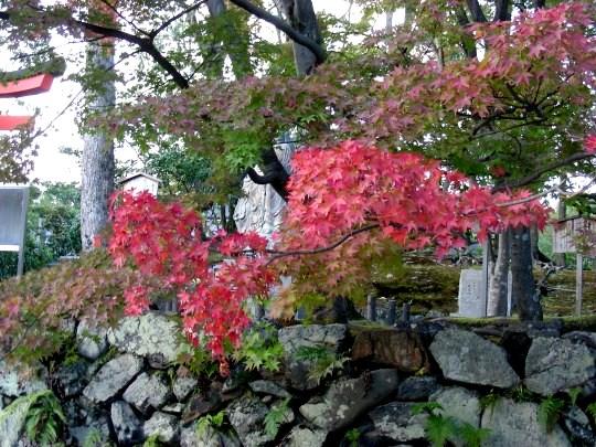 嵐山紅葉前 061