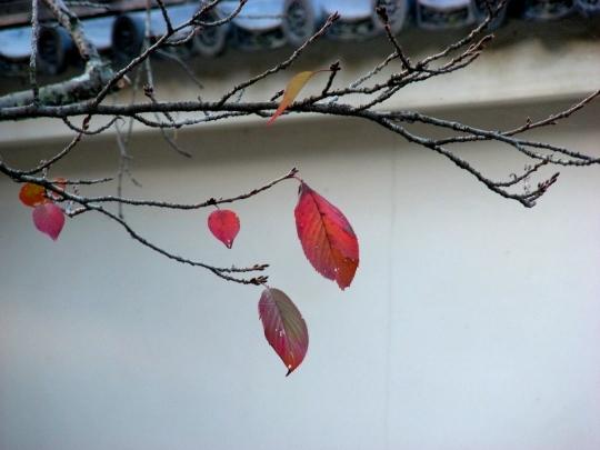 嵐山紅葉前 059