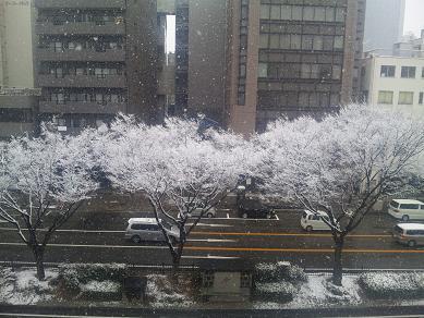 110211雪